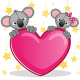 Lovers Koalas Royalty Free Stock Photography
