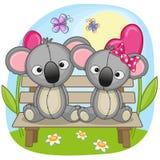 Lovers Koalas Stock Photo
