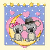 Lovers Koalas Stock Photography