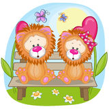Lovers Lions Stock Photos