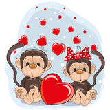 Lovers Monkeys Royalty Free Stock Photo