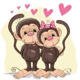 Lovers Monkeys Stock Photography