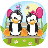 Lovers Penguins Stock Image