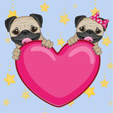 Lovers Pug Dogs Royalty Free Stock Images