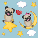 Lovers Pug Dogs Royalty Free Stock Image