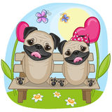 Lovers Pug Dogs Stock Image
