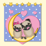 Lovers Pug Dogs Stock Photos