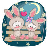 Lovers Rabbits Stock Images