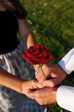 Lovers with rose. Red rose in hands of lovers outdoor Royalty Free Stock Photography