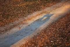 The lovers shadows on forest ground road. Couple kissing in autumn sunset stock photography