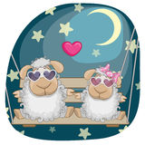 Lovers sheep Stock Images