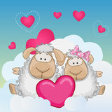 Lovers Sheep Stock Photography