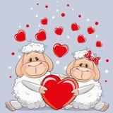 Lovers Sheep Stock Photos