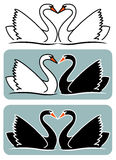 Lovers swans Royalty Free Stock Images