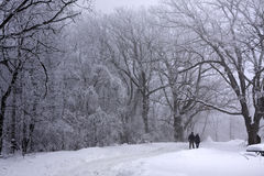 Lovers walking in the beautiful winter woods royalty free stock photos