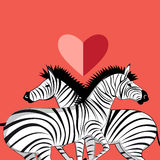 Lovers of zebras Royalty Free Stock Photo