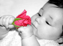 He loves me... Baby girl holding a red rose Focus on the rose stock photo