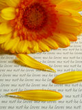 He Loves Me, He Loves Me Not. A Yellow Gerbera Daisy and Three Petals upon a Sheet of Paper Bearing the Words He Loves Me and He Loves Me Not Stock Image