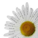 Loves Me or Not Chamomile. Romantic Concept Stock Photo