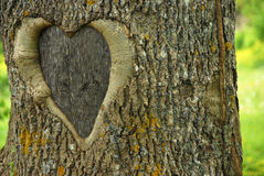 Lovetree. Natural tree with abstract heart Royalty Free Stock Photos