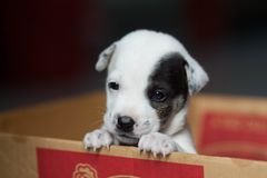 Lovey dog stock images