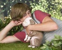 Lovin en su perrito de Pitbull Foto de archivo libre de regalías
