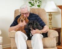Lovin' on the Pups Stock Photo