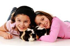 Lovin sur des cobayes d'animal familier Photographie stock