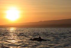 Lovina海滩巴厘岛,印度尼西亚清早日出 图库摄影