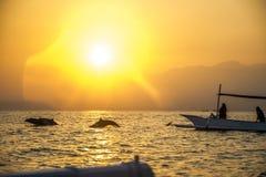 Lovina för fartyg Bali för fri delfin hållande ögonen på strand Arkivbild