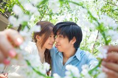 Loving asian couple under tree Royalty Free Stock Photography