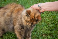 Pet The Cat 1600 royalty free stock photo