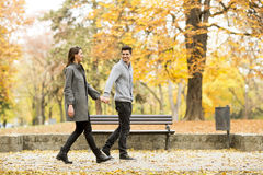 Loving couple in the autumn park Stock Photos