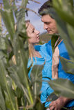 Loving couple in corn field Royalty Free Stock Images