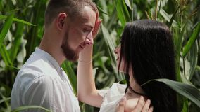 Loving couple each other standing in a corn field hugging and kissing. stock footage