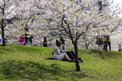 A loving couple sittings  under the  Japanese blossoms cherry Stock Photos