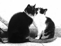 Loving couple of street cats hugging, black and white filter pencil drawing stock images