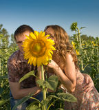 Loving couple and sunflower on the field Royalty Free Stock Photography