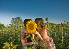 Loving couple and sunflower on the field Royalty Free Stock Photo