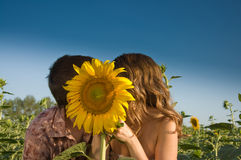 Loving couple and sunflower on the field Stock Photos