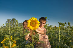 Loving couple and sunflower on the field Stock Image