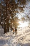 A loving couple is walking in a sunny forest. Winter Royalty Free Stock Image