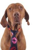 Loving dog Royalty Free Stock Image