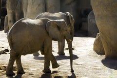 Loving Elephant Royalty Free Stock Photos
