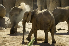 Loving Elephant Stock Photography