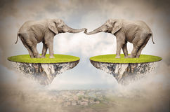 Loving Elephants. Stock Images