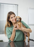 Loving Female Nurse Playing With Dachshund Royalty Free Stock Images