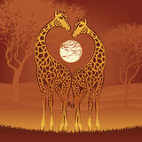 Loving giraffes Stock Photo