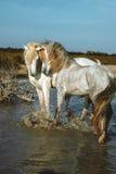 Loving horses Stock Photos