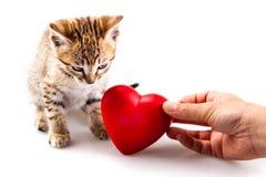 Loving a kitten Stock Photography
